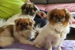 Wilma, Emmi, Ponya 14. juni 2015