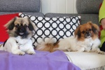 Emmi og Ponya 14. juni 2015