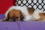 Ponya sover 14. juni 2015