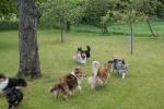 Hunde4_15.juni2015_kennelmartedal