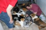 Hunde3_15.juni2015_kennelmartedal