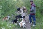 Hunde2_15.juni2015_kennelmartedal