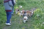 Hunde_15.juni2015_kennelmartedal