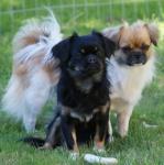 Wilma og Wanja 13. aug 2015