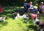 Hundenes dag i Fåborg 4. juni 2014